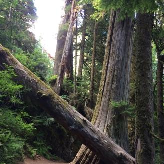 Mt. Rainier National Park, Grove of the Patriarchs